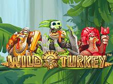 Онлайн игра Wild Turkey — играть на официальном сайте